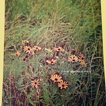 #17 ~ Original Woodstock 1969 Program from estate - Music Memorabilia