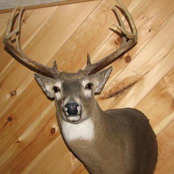 Deer Heads - Animals