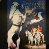THE LIPIZZANER STALLIONS