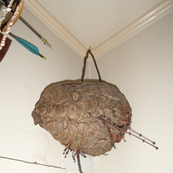 Hornet Nest  - Animals