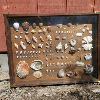 Very Large SHadowbox Shell Collection - Animals