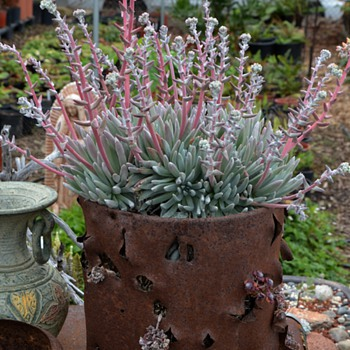 What I do with Most of My Enormous Planter Collection... - Art Pottery