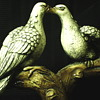 """Couple of Mourning Dove bounding""""1950-60"""""""