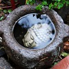 I can&#039;t forget this Buddha Head in an old stone trough in my garden