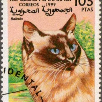 "1999 - Saharan Rep. ""Siamese Cat"" Postage Stamp - Stamps"