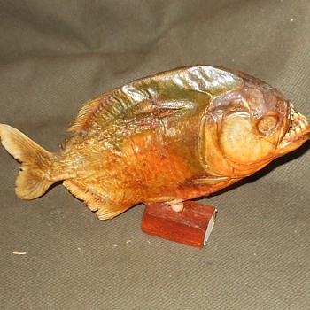 Preserved Pirinha Fish From The Rose Bowl