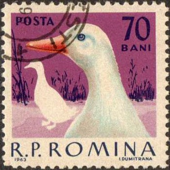 "Romania - ""Poultry"" Postage Stamps - Stamps"