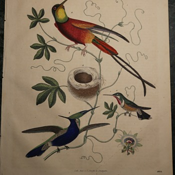 1844 German Lithograph of Some Tropical Hummingbirds