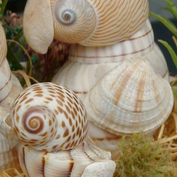 Family Of Parrots Made From Seashells