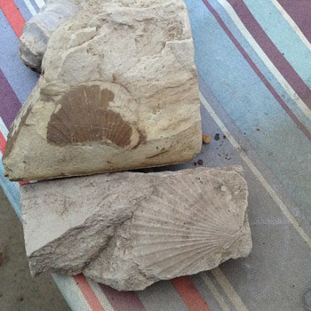 Some fossils and a petrified wasp nest - Animals