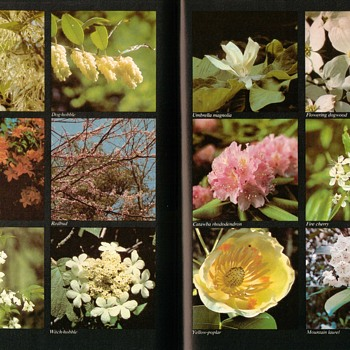 Flora and Fauna of the Great Smoky Mountains - Books