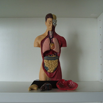 Human Anatomy Doll