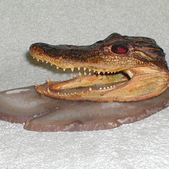 Alligator head - Taxidermy - Animals