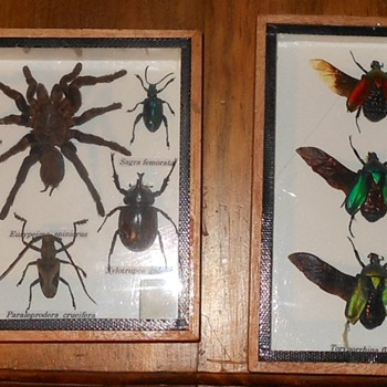 Insect Collections - Animals