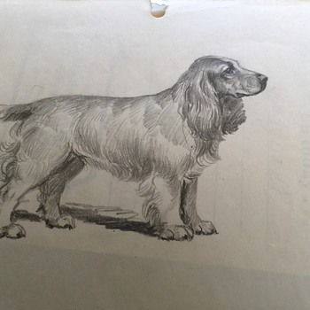 Sketches of Spaniel Dog 1950's unknown Artist, Peter A Juley Photographer