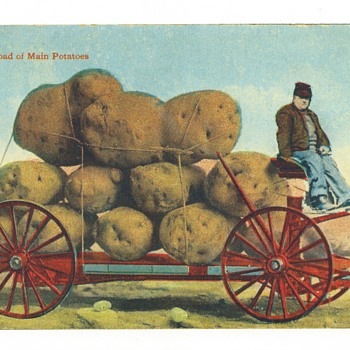 Main Potatoes - Postcards