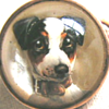 Antique Essex crystal/reverse painted intaglio gold brooch of a Jack Russell terrier.