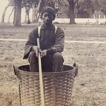 Orange Picker Occupational - Photographs