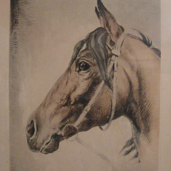 Horse Drawings - Animals