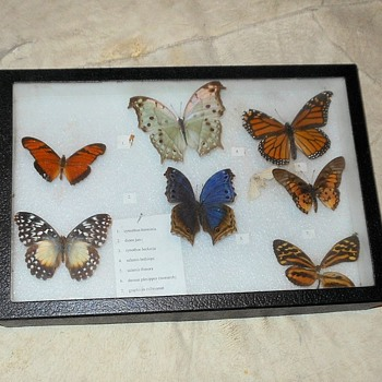Old School Butterfly Collection