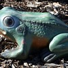 Signed Garden Ornament of a Frog - Al's Garden Art