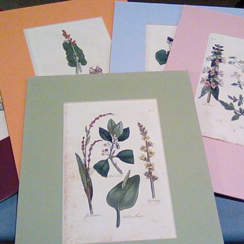 Botanical Herb book hand Colored pages - Visual Art