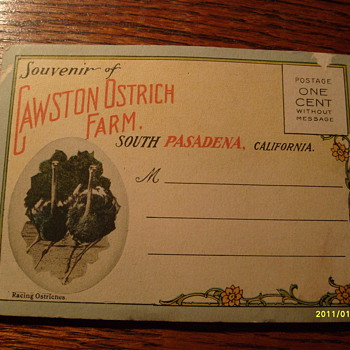 Cawson Ostrich Farm Calif. - Postcards