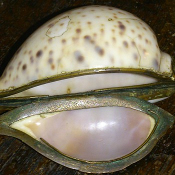 Georgian period cowrie shell snuffbox