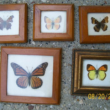 Part of my Butterfly collection . Marked on back from Ecuador  - Animals