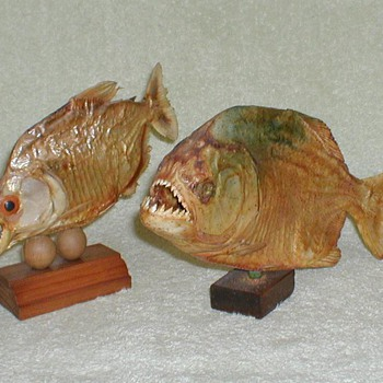 Brazilian Piranhas - Taxidermy