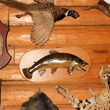 A Brown Trout Mount Taxidermy - Animals