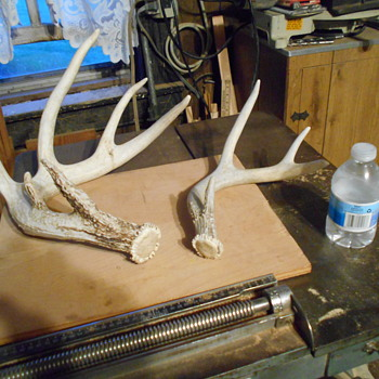 1st Sheds...... - Animals