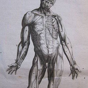 Early Anatomical Engraving (1760)