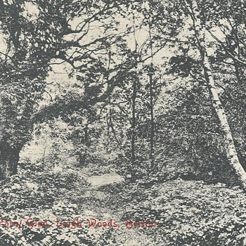 FAIRY GLEN LEIGH WOODS BRISTOL - Postcards