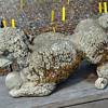 More Garden Poodles - Probably Mid-Century - Great Moss on one of them!