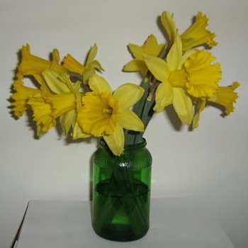 Happy Spring! Daffodils only last 4 days