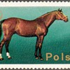 """Poland - """"Horses"""" Postage Stamps"""
