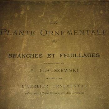 La Plante Ornamentale Branches Et Feuillages