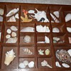 here's my attempt at combining sea shells with art display