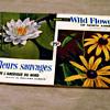 Wild Flowers Of North America, Brooke Bond Canadian Album 1961