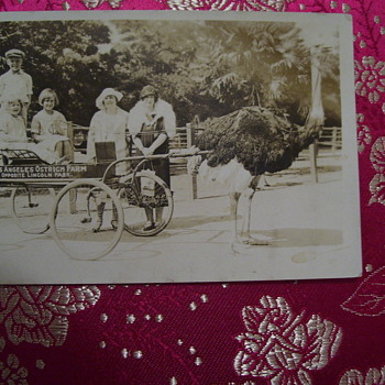 VNTAGE PHOTOGRAPH, KIDS AT OSTRICH FARM,LOS ANGELES--OPPOSITE LINCOLN PARK--TAKE A CART RIDE PULLED BY ONE!