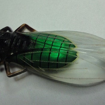 A new addition to my Cicada family, a bakelite brooch.