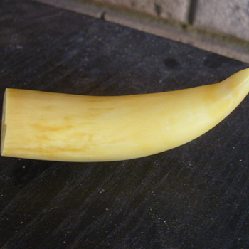 TAXIDERMY TUSK ? BONE OR IVORY