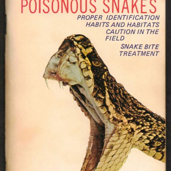 Guide to Florida - Poisonous Snakes