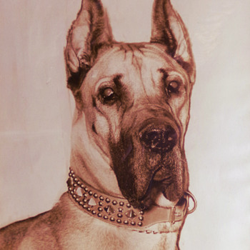 A Great Dane c. 1960 - Animals