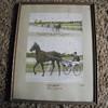 Horse racing photo