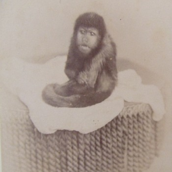 The pet monkey photograph