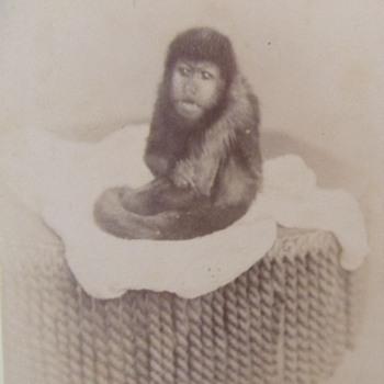 The pet monkey photograph