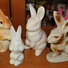 Bunnies are breeding.....of course!