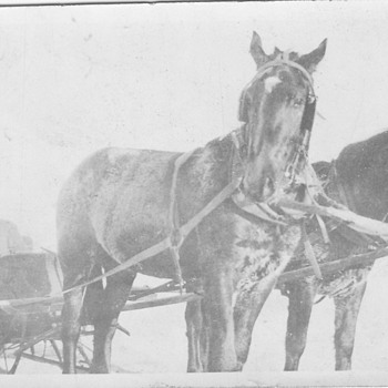 My Canada Family in Sleigh pulled by horses  - Photographs